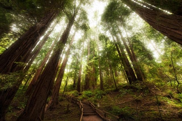 God's Grace - Muir Woods